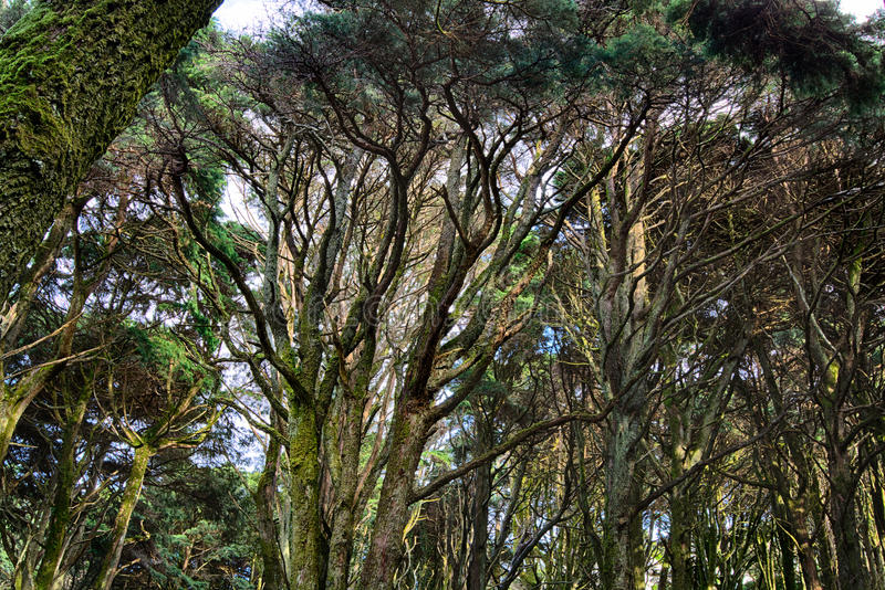 Trees florest background. Deep florest trees agaisnt sky stock images