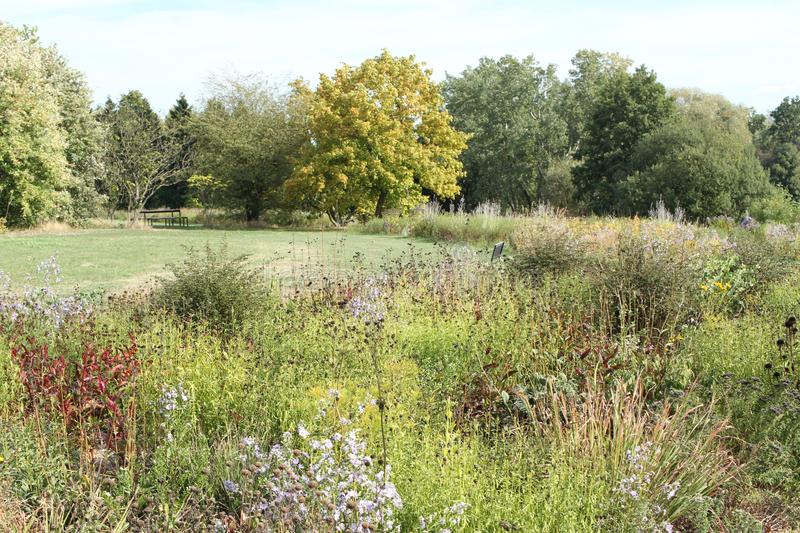 Trees and flowers in the park.  royalty free stock photo
