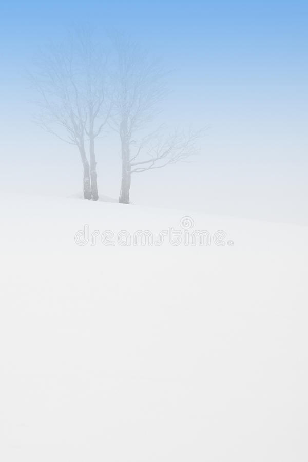 Download Trees in fog stock photo. Image of abstraction, outdoors - 13106774