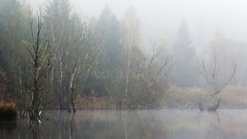 Download Trees in fog stock photo. Image of habitat, dying, landscape - 22633694