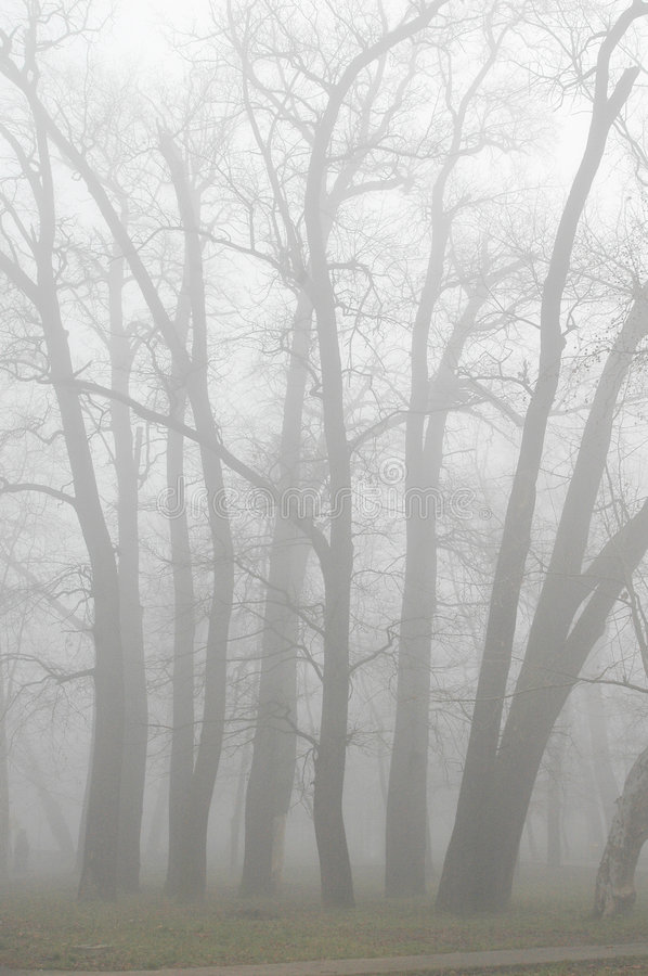 Download Trees in fog stock photo. Image of light, nature, landscape - 326074