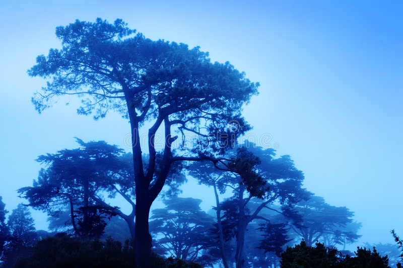 Trees in fog. Fantasy trees at foggy morning. Soft focus stock photo