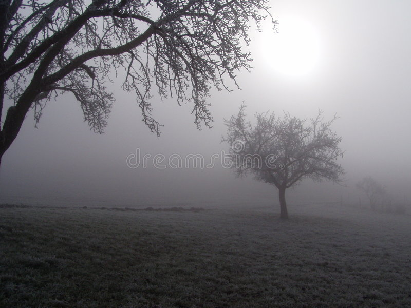 Download Trees in the fog. stock photo. Image of black, winter, hazy - 67038