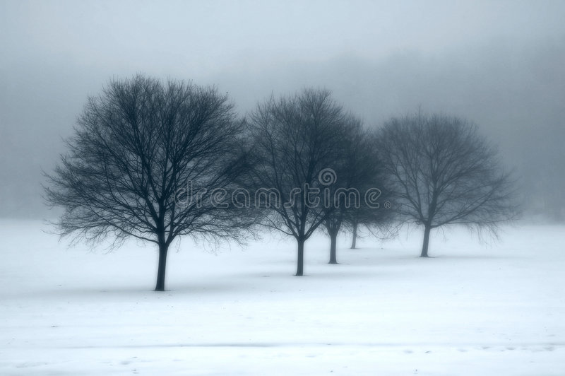 Trees in the fog stock images