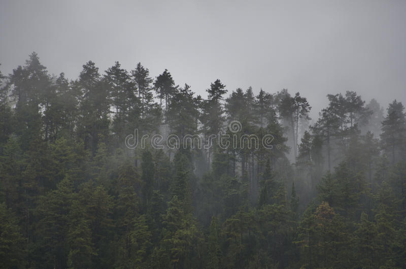 Trees and fog royalty free stock photography