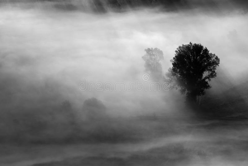 Trees in the fog black and white photo royalty free stock photos