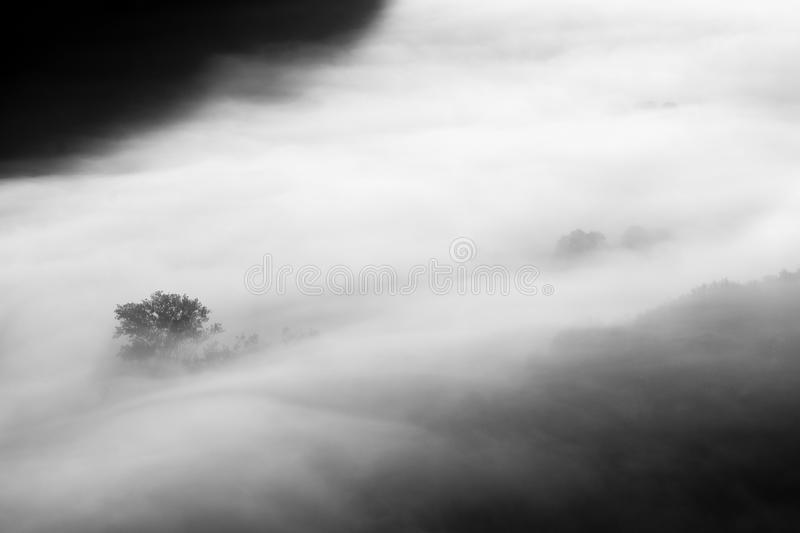 Trees in the fog black and white photo stock photos