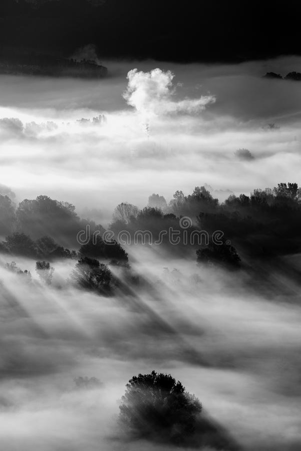 Trees in the fog black and white photo royalty free stock images