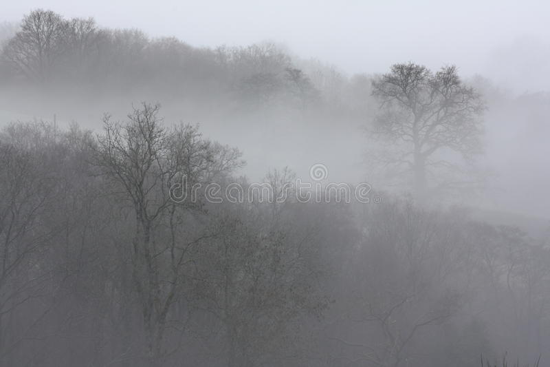 Trees in Fog stock image