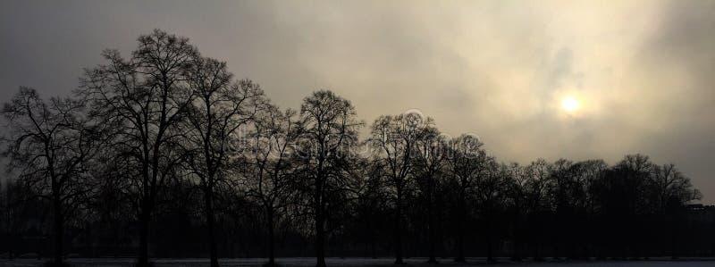 Trees, fog and the sun. stock photos