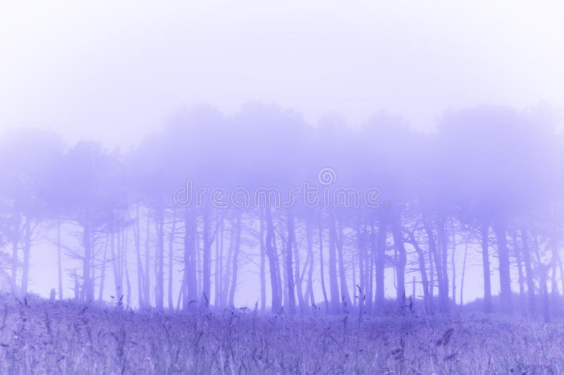 Trees in fog with vintage filter effect. Trees in the fog with vintage filter effect stock images