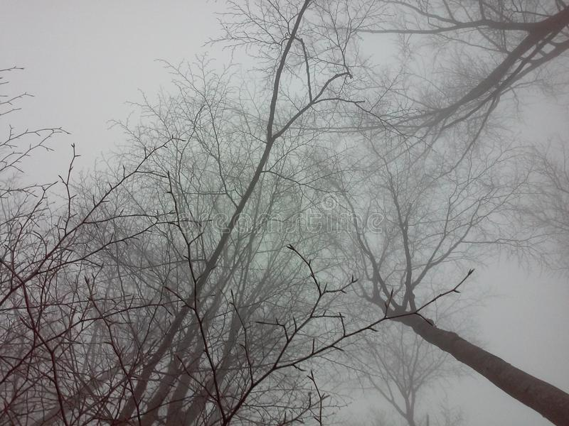 Trees and fog royalty free stock photo