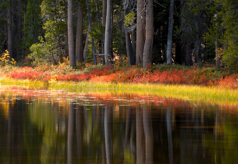 Trees and foliage reflecting their fall colors into a Yosemite p stock photos