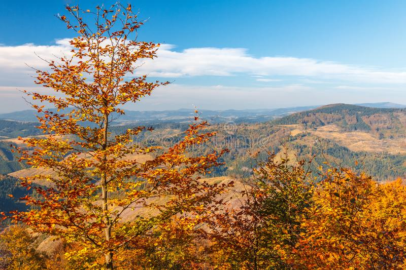 Trees in the foreground autumn mountainous landscape. stock image