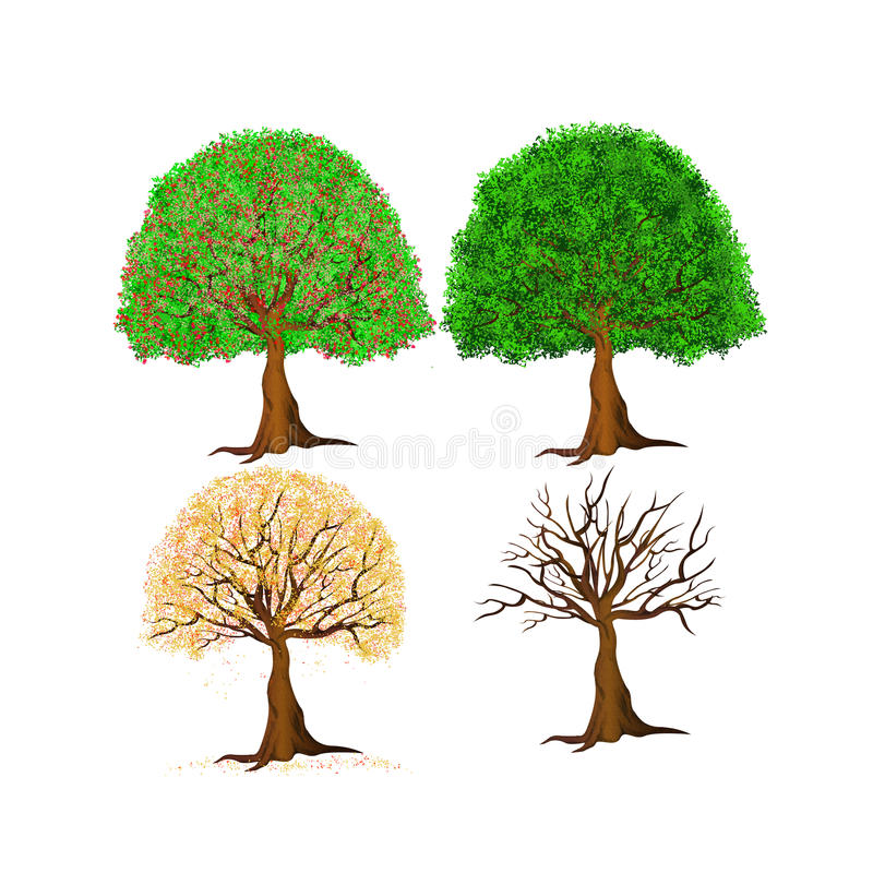 Trees four seasons royalty free stock photography