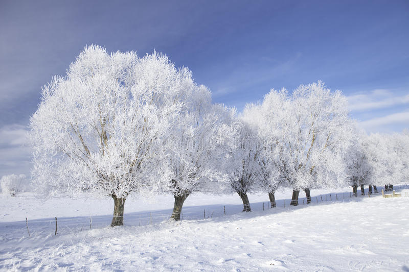 Download Trees in frost stock photo. Image of nature, chilly, blue - 16748824