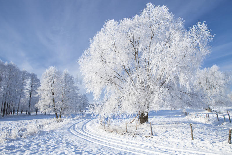 Trees in frost. And landscape in snow against blue sky. Winter scene royalty free stock photo