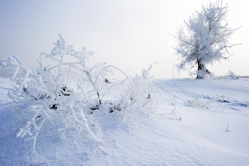 Trees in frost and landscape. In snow against sky. Winter scene stock photography