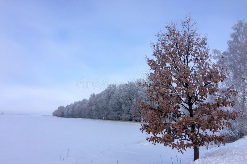 Trees in frost. Tree with dried leaves, boundless snow-covered steppe, many trees in frost stock images