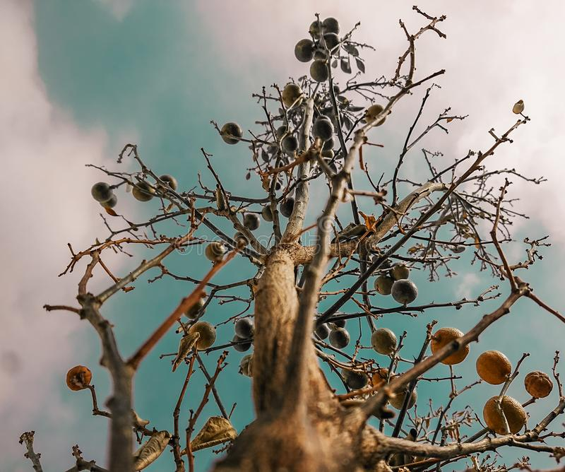 Trees fruits sky green white orange leaves summer black roses lovely healthy views shoot royalty free stock images