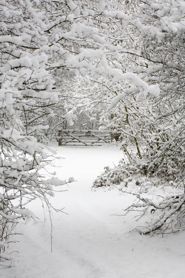 Trees and gate in snow stock photography