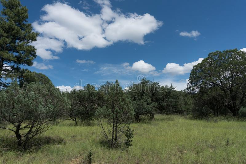 Trees in the Gila National Forest in New Mexico. A cluster of trees welcomes visitors to the Little Walnut picnic area which is part of the Gila National Forest stock image