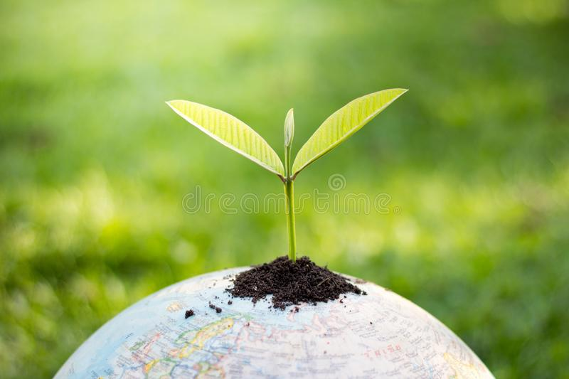 Trees on the globe, environmental conservation ideas, world environment day royalty free stock photo