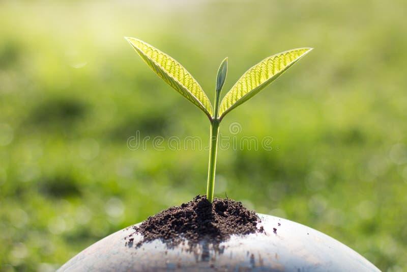 Trees on the globe, environmental conservation ideas, world environment day stock photos