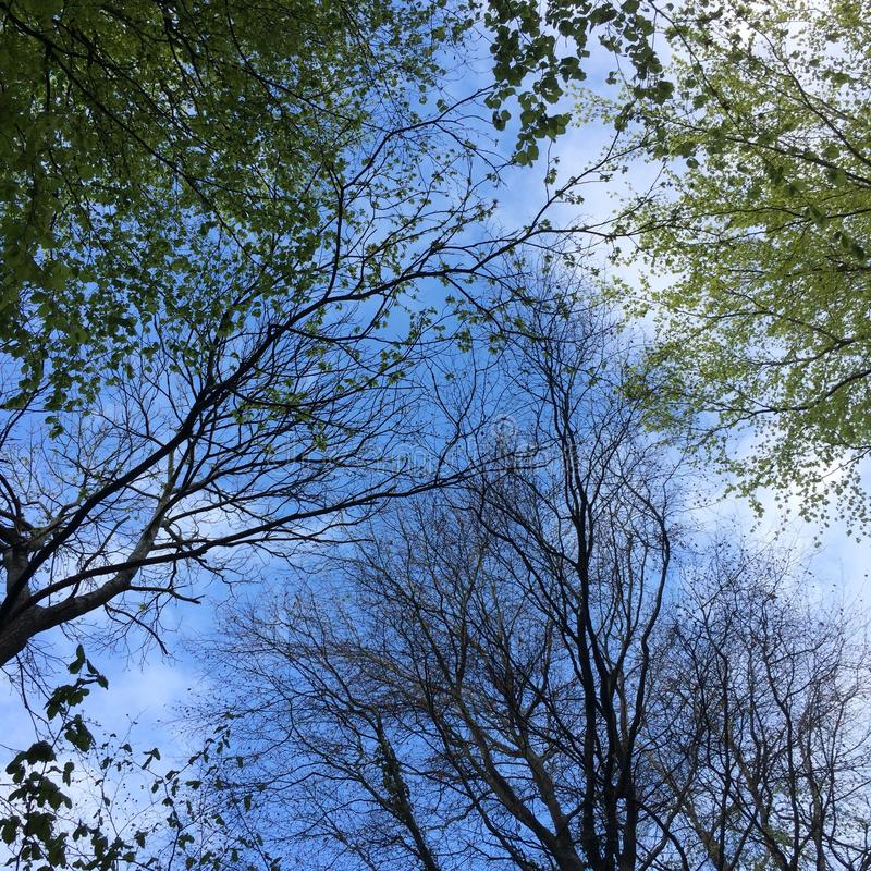 Trees filling the sky in woodland stock photos