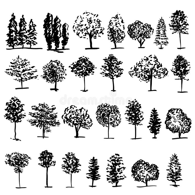 Trees graphic hand drawn vector engraving doodle sketch. On white background, vintage style, template for design pattern, collection of brush, printing royalty free illustration