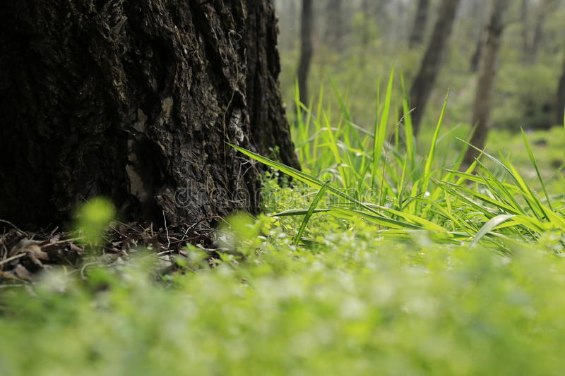 The trees and grass stock photography
