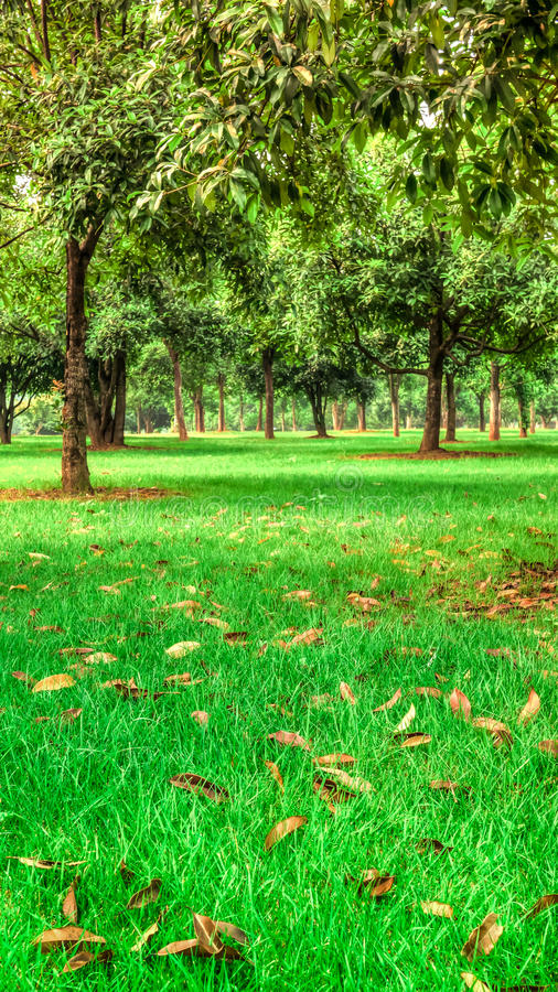 Trees and grass. A large tracts of forest and grass stock photography