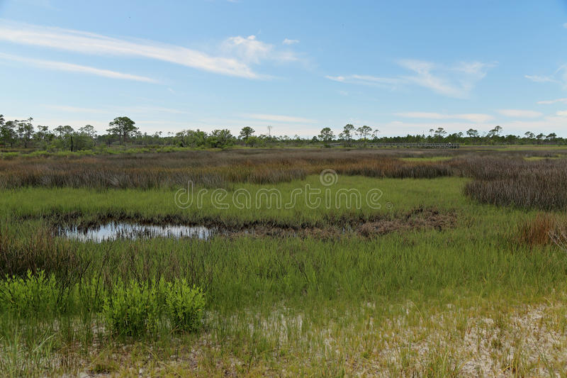 Trees and grasses in a saltwater marsh stock photo