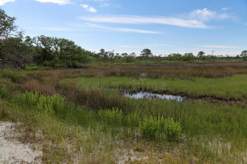 Trees and grasses in a saltwater marsh stock photos