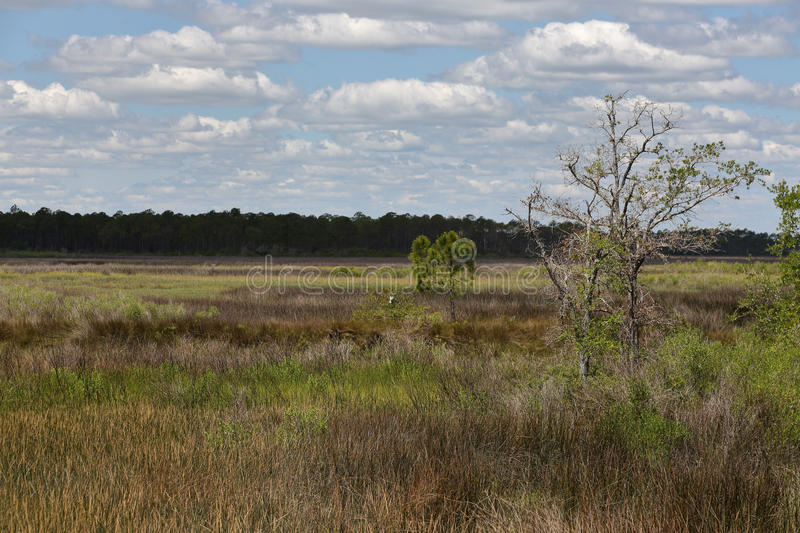 Trees and grasses in a saltwater marsh with blue sky and clouds royalty free stock images