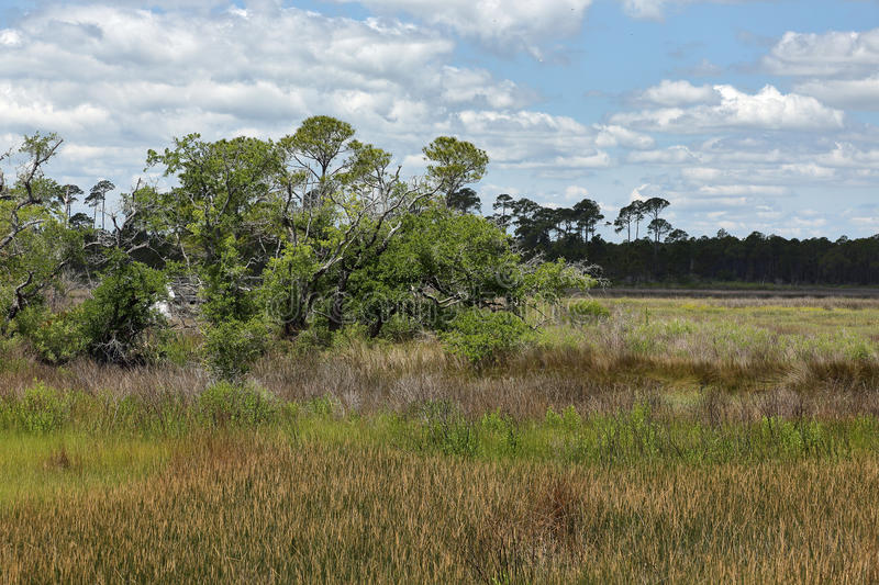 Trees and grasses in a saltwater marsh with blue sky and clouds royalty free stock photography