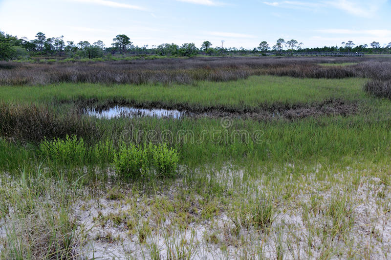 Trees and grasses in a saltwater marsh stock photography