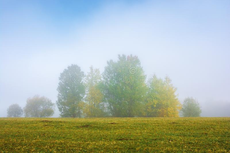 Trees on the grassy meadow on a foggy morning stock photo