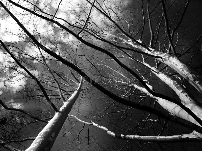 Trees Grayscale Low Angle Photography stock photography