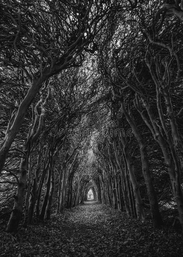 Trees In Grayscale Photography stock photo