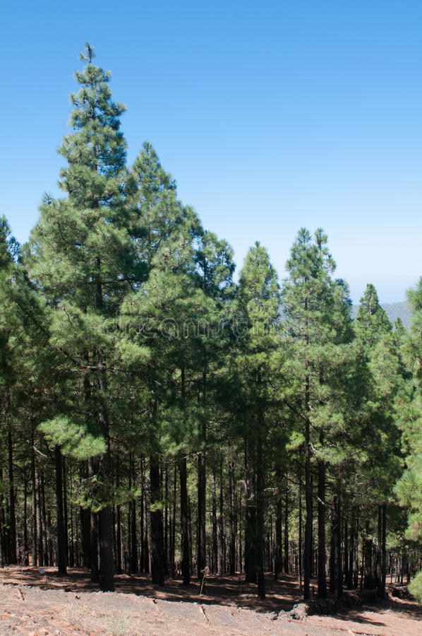 Trees In A Green Forest Stock Photography