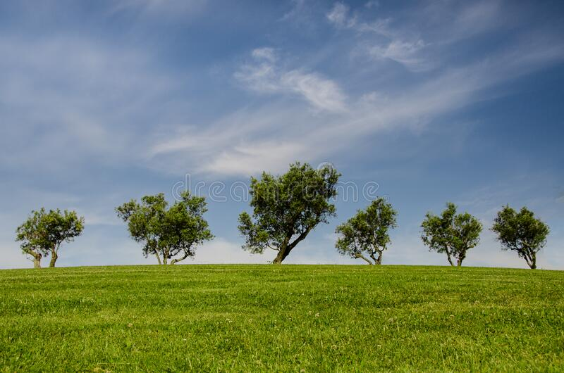 Trees on green hillside stock photos