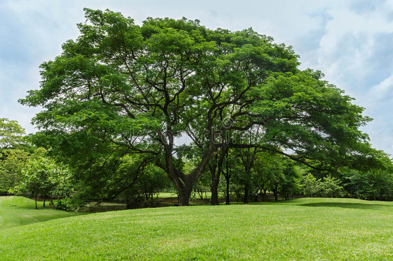 Trees and green lawn in the garden stock photo