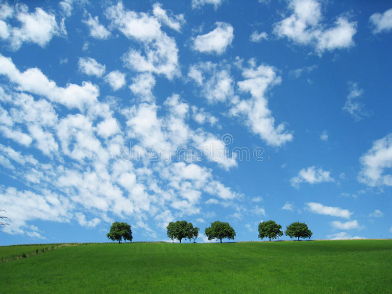 Trees with blue sky and clouds (7). Trees with a green meadow and blue sky and clouds in background stock photography