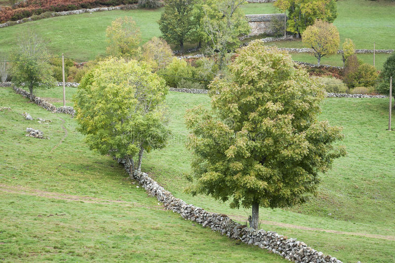 Trees In Green Pastures Fenced With Stone Walls Stock Photo
