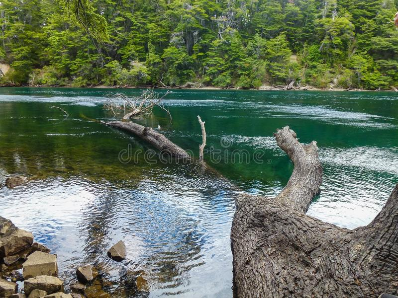 The trees on the green river. A beautiful view of a tree in a green river royalty free stock photos