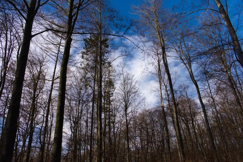 Trees in the blue sky royalty free stock photos