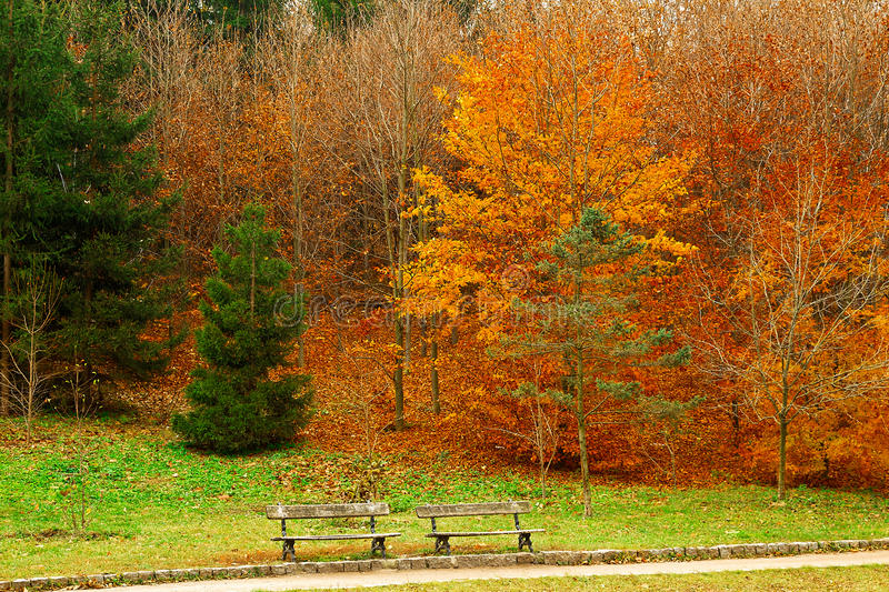 Download Trees In A City Park In Autumn Season Stock Image - Image: 30157937