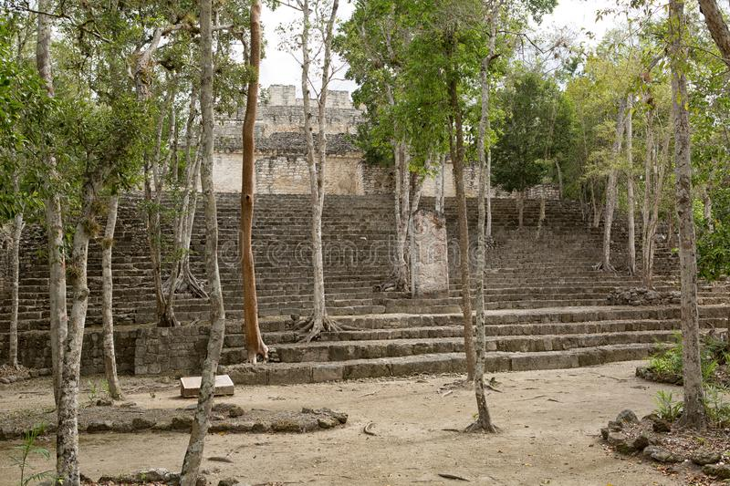 Trees growing out of pyramid stairs at Calakmul Mexico stock images