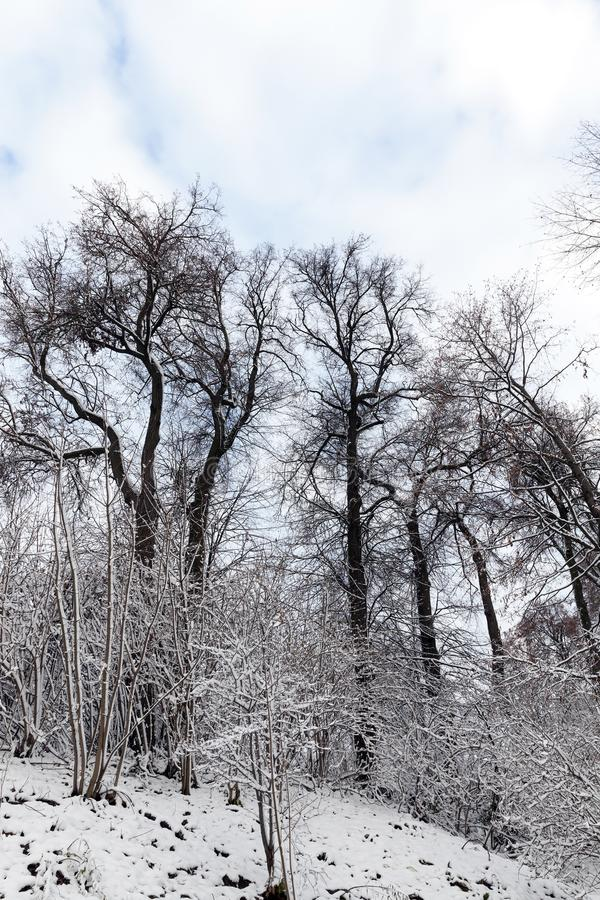 trees covered with snow royalty free stock photos